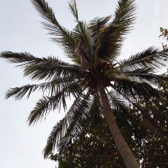 Ko Lon Island User Photo