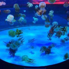 左海海底世界用戶圖片