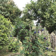 西雙版納南藥園景區用戶圖片