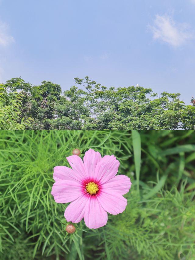 德清下渚湖濕地公園