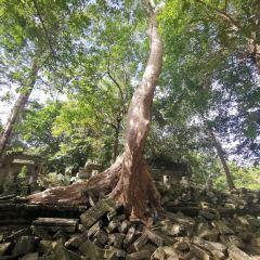 Beng Mealea User Photo