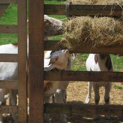 Windmill Hill City Farm User Photo