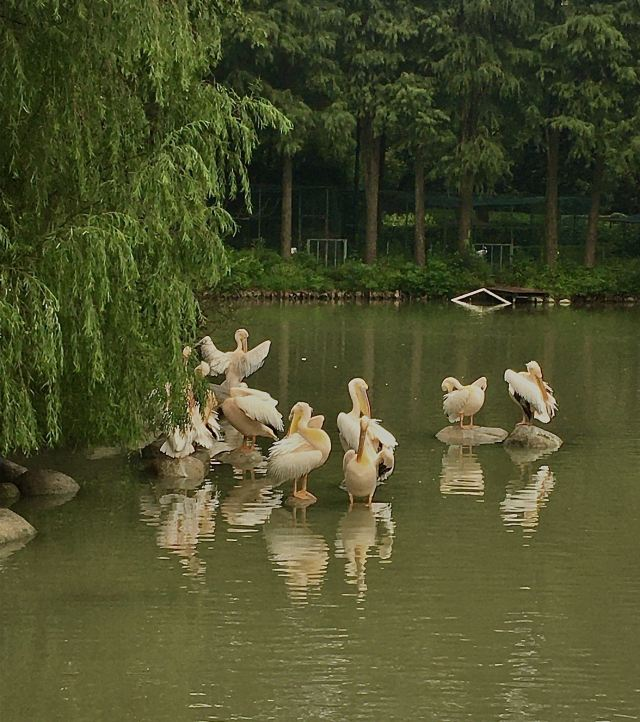 武漢動物園