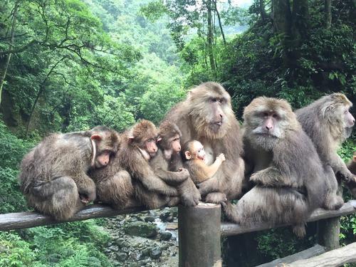 어메이산(아미산) 자연 생태 원숭이 보호구역