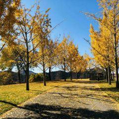 Beijing Pinghu District Jinhai Lake User Photo