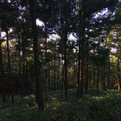 雞公山風景區用戶圖片
