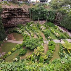 洞穴花園用戶圖片