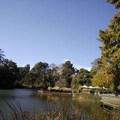 皇家植物園用戶圖片