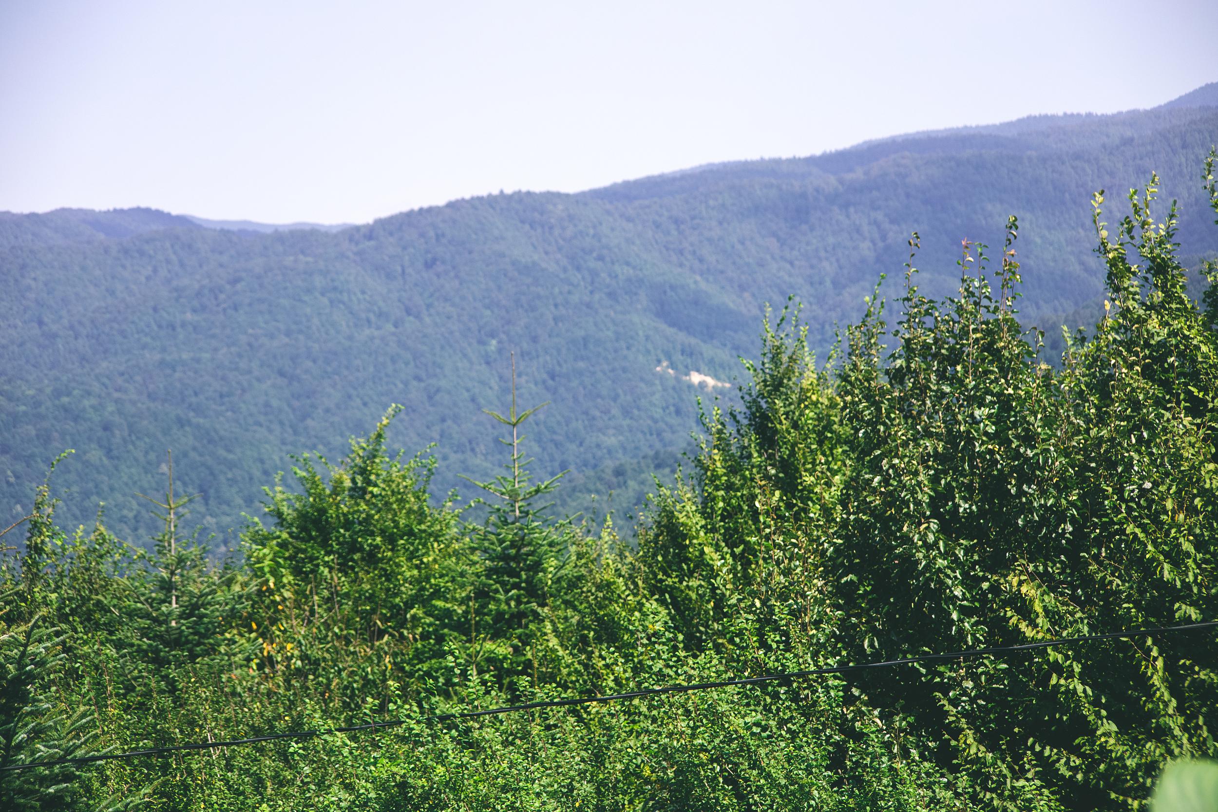 Wild River Mountain Scenic Area