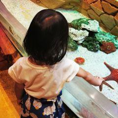 亞特蘭蒂斯失落的空間水族館用戶圖片