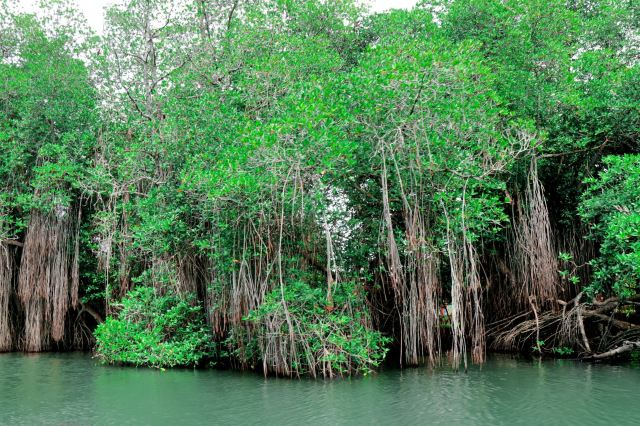 本托塔紅樹林