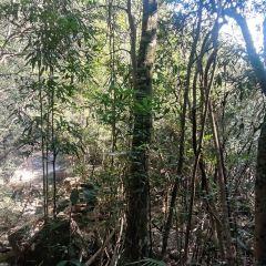 Gupo Mountain User Photo