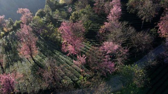 无量山樱花谷景色超美超美的,人间仙境一般的美景尽收眼底,令人