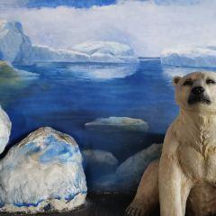 Qujiang Polar Ocean Park User Photo
