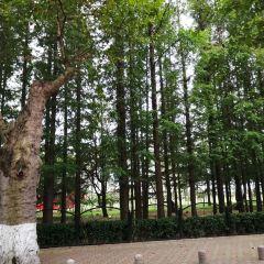 櫸林公園用戶圖片
