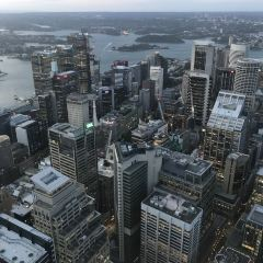 Sydney Tower User Photo