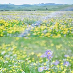 Russian Mouth Flower Seaview Area 여행 사진