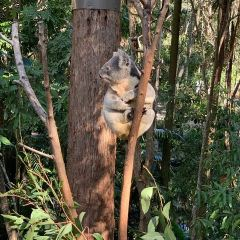 Currumbin Wildlife Sanctuary User Photo