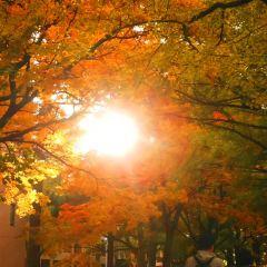 홋카이도 대학교 여행 사진