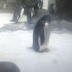 Wuhan Haichang Polar Ocean World User Photo