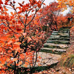 Pofeng Ridge User Photo