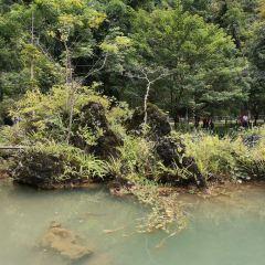 翠穀濕地用戶圖片