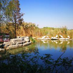 Pan'an Lake Wetland Park User Photo