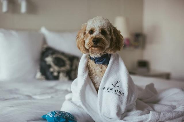 Pet Friendly Accommodation in Australia