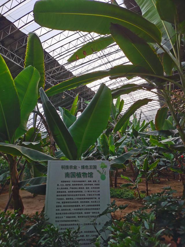 지파 생태계 농업 시범 관광파크