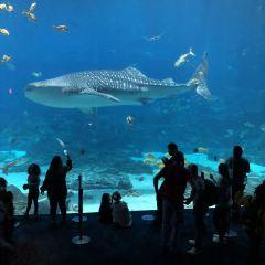 Georgia Aquarium User Photo