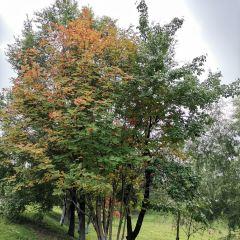 헤이룽장성 삼림식물원 여행 사진