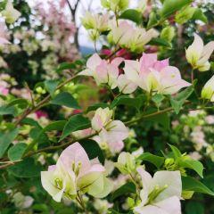 Sai Shicheng Flower Park User Photo