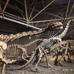 祿豐恐龍穀用戶圖片