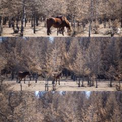 輝騰錫勒草原用戶圖片