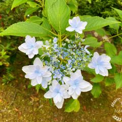 Awata Shrine User Photo