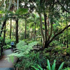 Botanic Garden用戶圖片