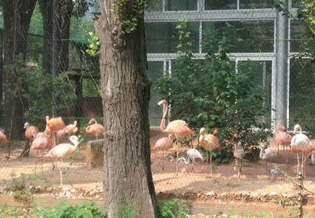 Flamingo Hall