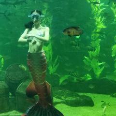 婁底海立方海洋公園用戶圖片