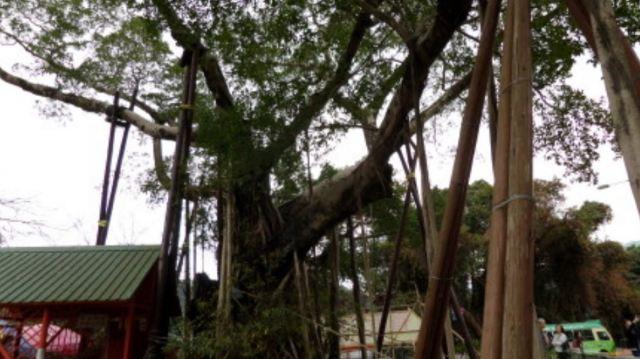 ต้นไม้อธิษฐานหลัมเซิน