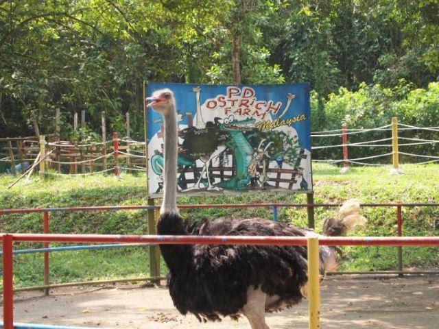PD Ostrich Show Farm