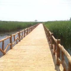 황하구생태관광구 여행 사진