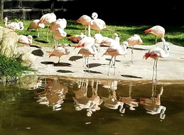 休士頓動物園