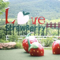 Genting Strawberry Farm User Photo