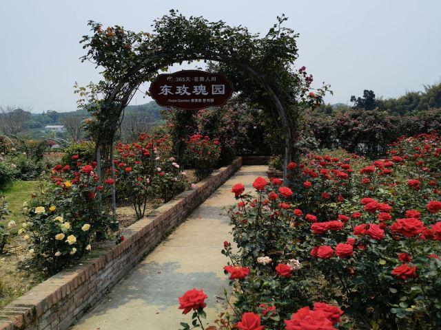 Flower Dance World