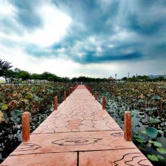 Green Dream Wetland Ecological Park User Photo
