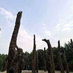 오목림 여행 사진