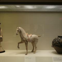 達拉斯藝術博物館用戶圖片