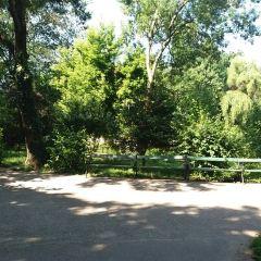 Cismigiu Gardens用戶圖片