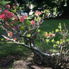 Queenstown Gardens User Photo