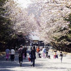 홋카이도 신사 여행 사진